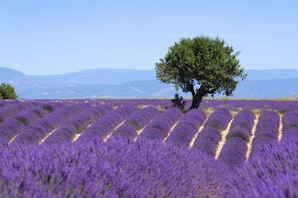 Genieten in de Provence